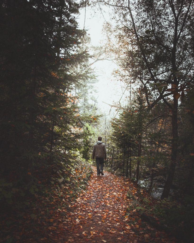 Man walking in woodland